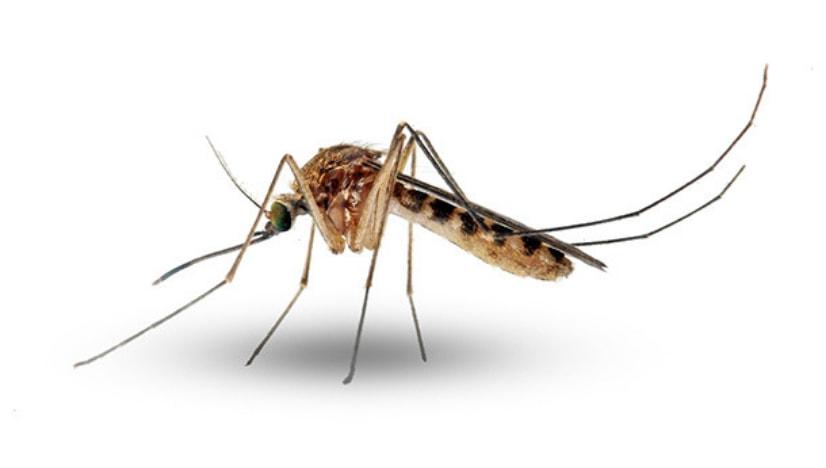 Zika Virus Kya Hai